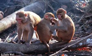 Chemical widely used in Plastic Packaging affecting Mammary Gland Development in Monkeys