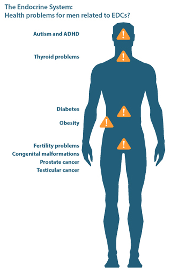 Health problems for men related to EDCs poster