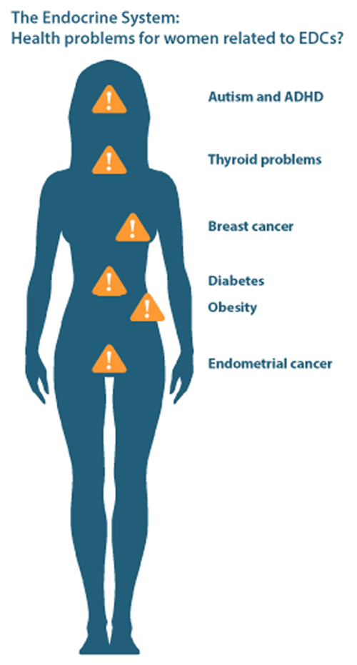 Health problems for women related to EDCs