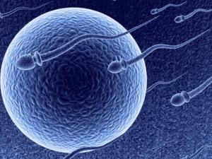 sperm egg image