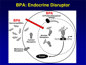 Maternal BPA programs Offspring Metabolic Syndrome