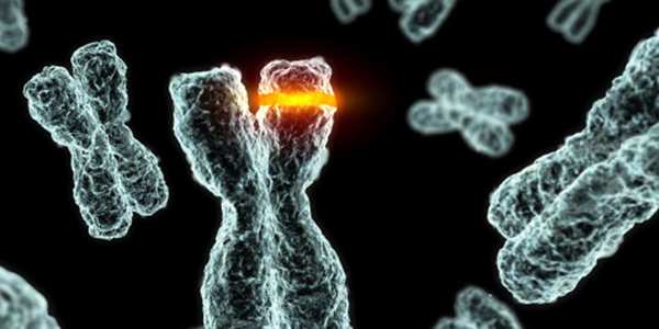DNA error during cell division replication