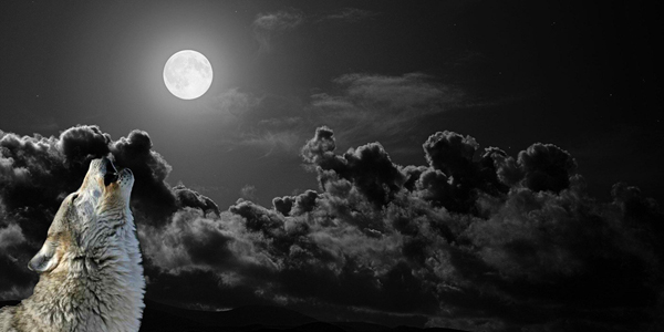 full_wolf_moon image
