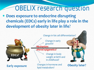 Prenatal Exposure to EDCs and Obesity