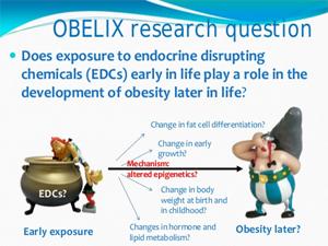 Prenatal Exposure to EDCs andObesity