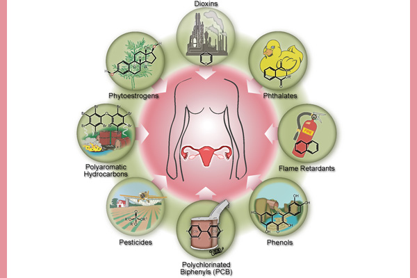 Earlier menopause linked to everyday chemical exposures image