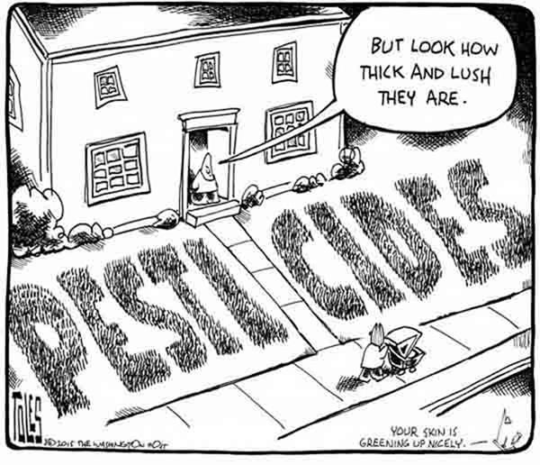 The-Greening-of-America image