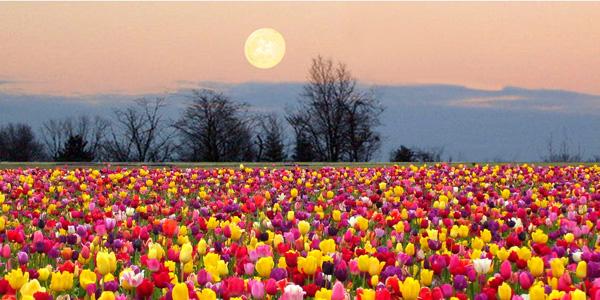 full-flower-moon image