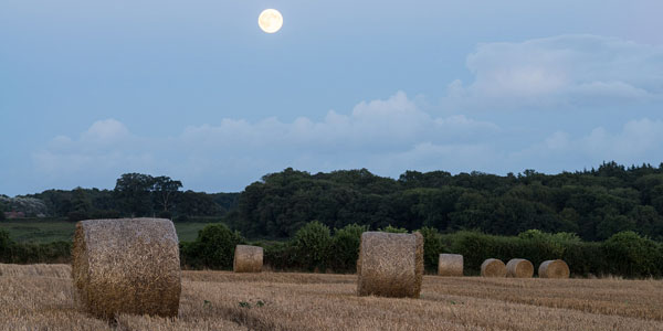 image of full hay moon
