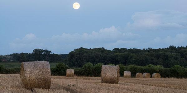 image of full hay moon
