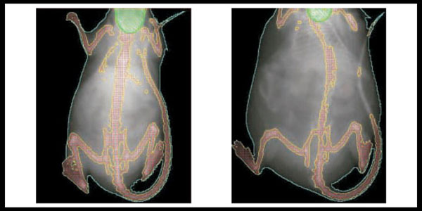 image of Control-and-DES-treated-Mice