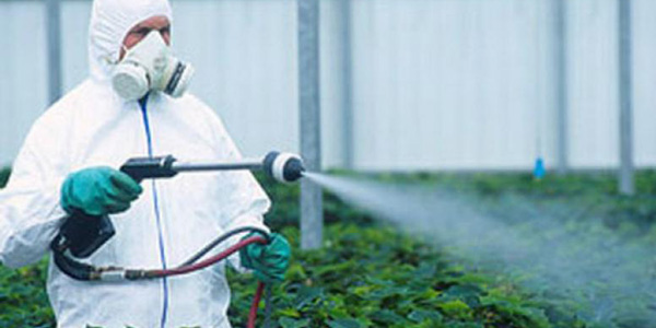 Pesticides-associated-to-genetically modified foods image