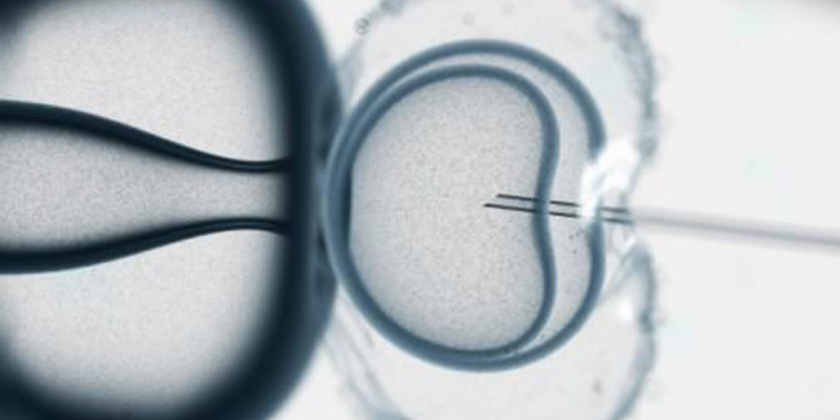 IVF: BPA causes a linear increase in the death rate ofembryos
