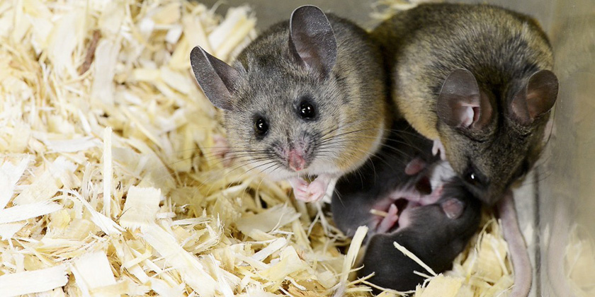 BPA exposure linked to changes in reproductive-related behavior inmice