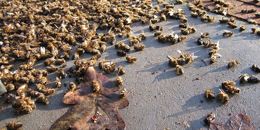 Neonicotinoids chemicals use on crops and losses of wild beespecies
