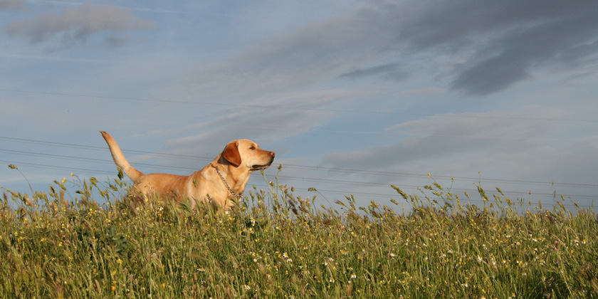 Environmental contaminants linked to decline in dogfertility