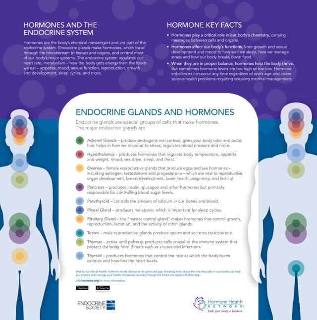 Endocrine Glands and Hormones Key Facts | DES Daughter Network