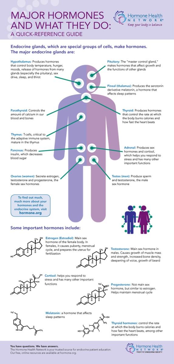 Major Endocrine Glands And Important Hormones Des Daughter Network