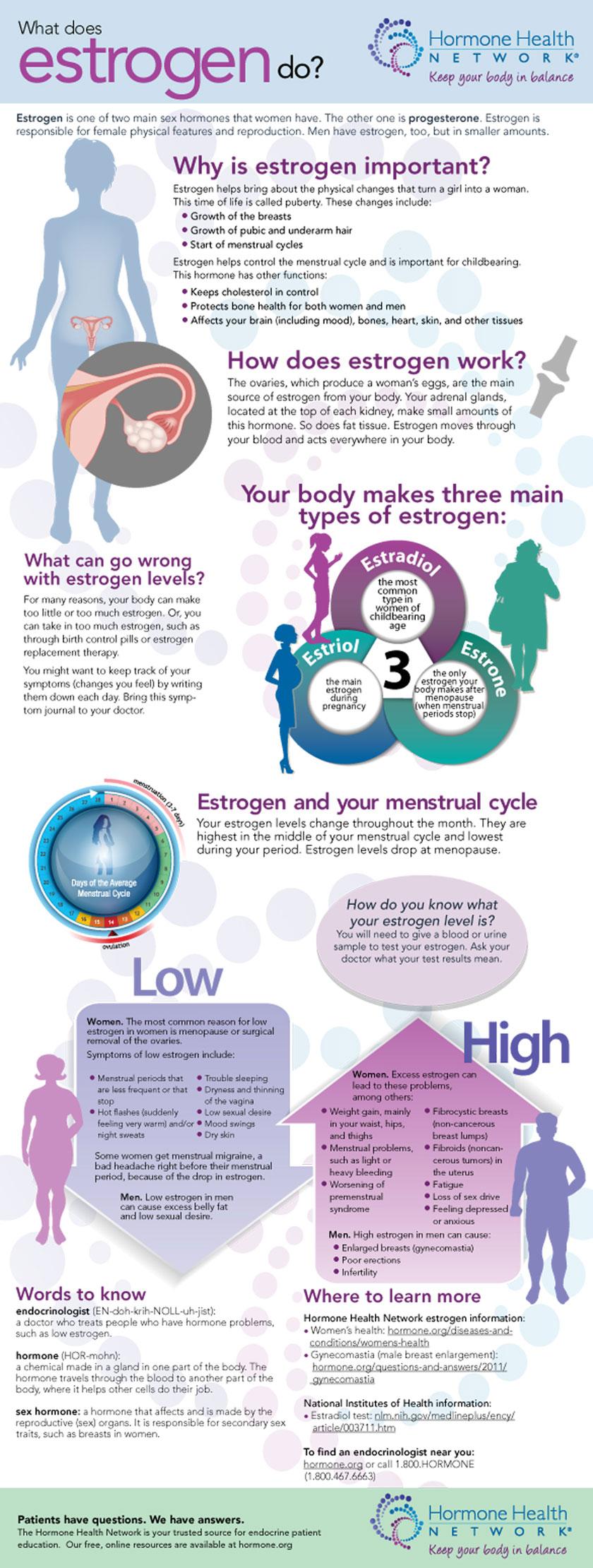 What does Estrogendo?