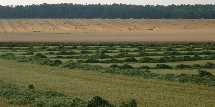 Reducing pesticide use while preserving crop productivity and profitability on arablefarms