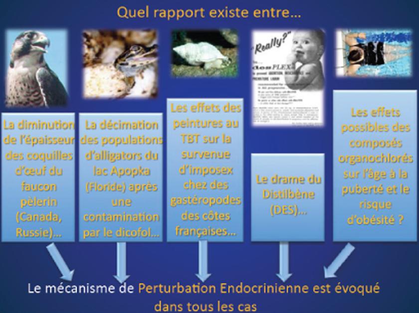 Perturbateurs endocriniens, le temps de la précaution