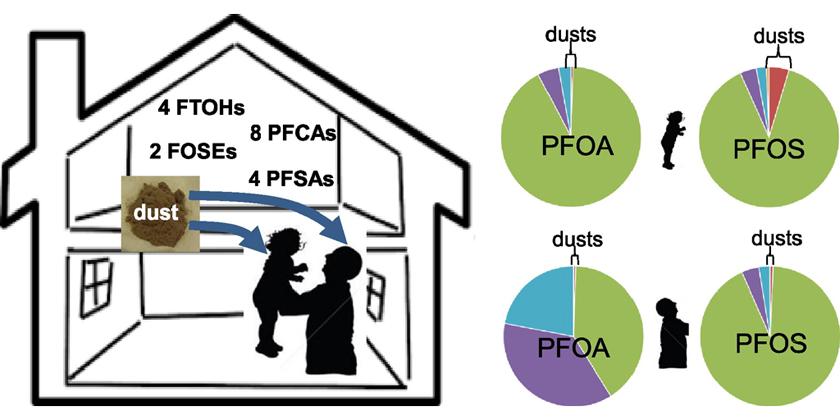 image of PFAS exposure via house dust