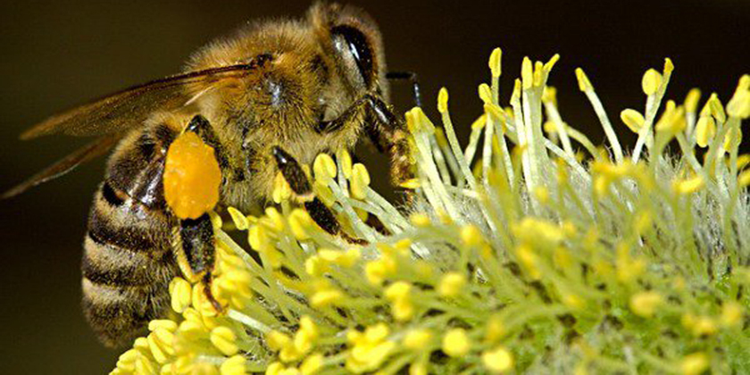 Near-complete ban on the use of neonicotinoid insecticides across the EU