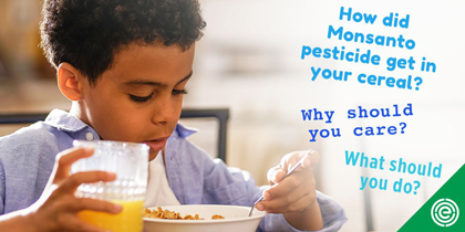 Glyphosate in Food Controversy : Is it Safe to Feed My Children Cereal for Breakfast?