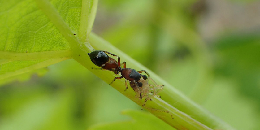 Evidence that organic farming can enhance pest control