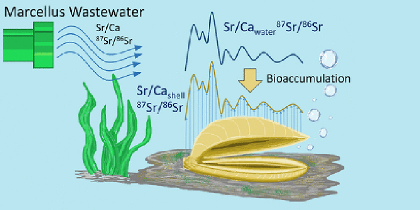 Fracking chemicals entering the foodchain