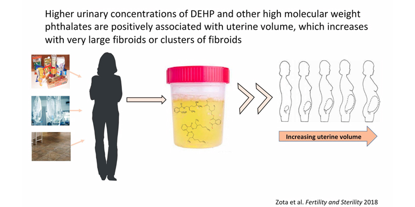 Do Harmful Chemicals in Health and Beauty Products Make Uterine Fibroids Grow ?