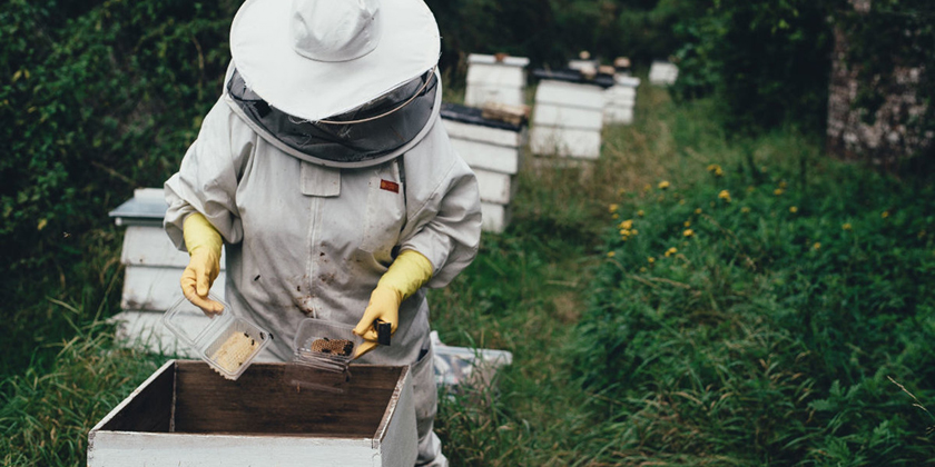 Pesticide residues found in 98 percent of Canadian honey samples
